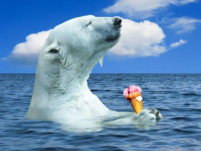 Urs polar afectat de incalzirea globala.