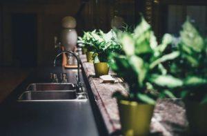 Plantele de interior prefera pervazul ferestrelor.
